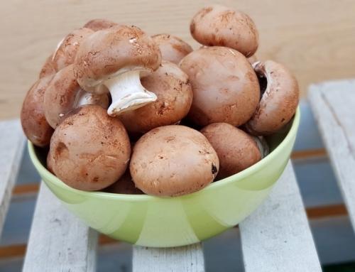 Bezglutenowy sos grzybowy na szybki obiad