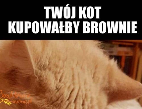 Twój kot kupowałby brownie bezglutenowe….